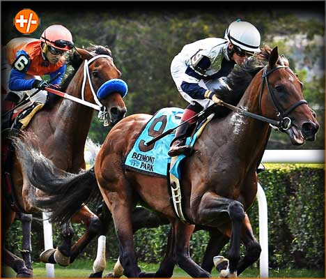 Belmont Park - Hurdle Stakes Betting Odds, Picks and Preview
