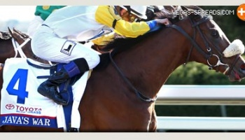 Current 2013 Kentucky Derby Odds - JAVA'S WAR Predictions and Horse Betting Preview