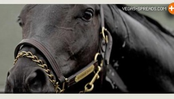 ORB Triple Crown Hopeful: Live Preakness Odds Show Favorite 7/5