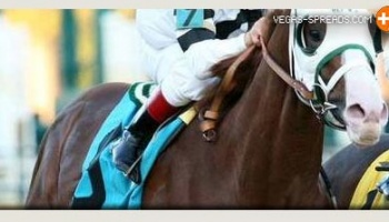 2013 Preakness Picks: WILL TAKE CHARGE 12 to 1 Betting Odds