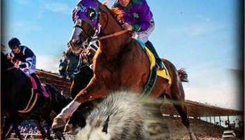 Belmont Stakes 2014 - CALIFORNIA CHROME Early Odds