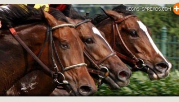 Kentucky Derby 2014: Favorite Longshot to Win