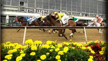 2014 Preakness Stakes: Trifecta Picks & Morning Line